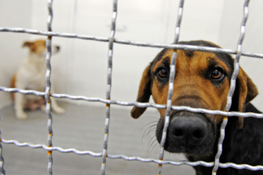Cage_For_Dogs2